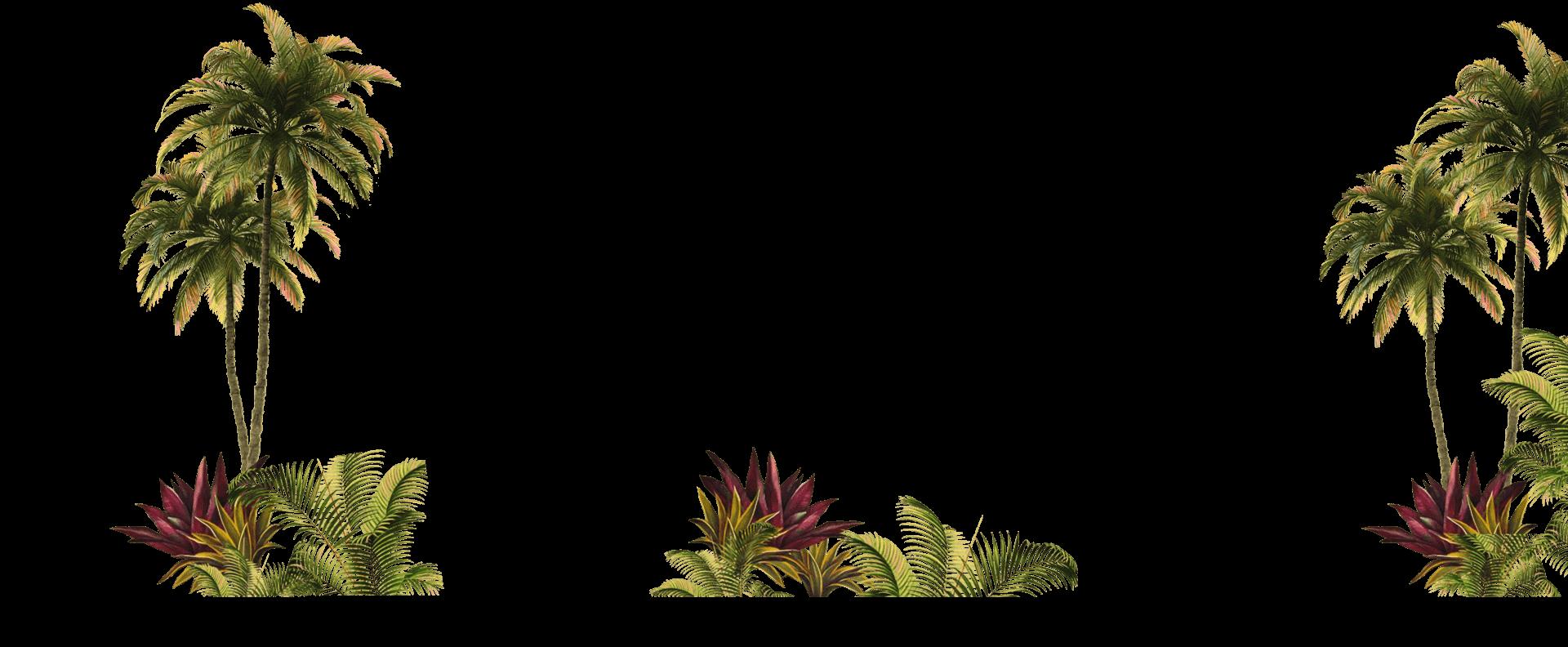 background coqueiros